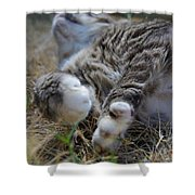 For The Love of Stretching Shower Curtain by Marilyn Wilson