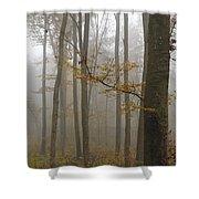 Forest In Autumn Shower Curtain by Matthias Hauser
