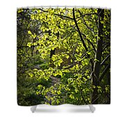 Forest Path Shower Curtain by Elena Elisseeva