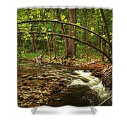 Forest River Shower Curtain by Elena Elisseeva