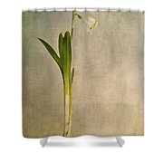 foretaste of spring Shower Curtain by Priska Wettstein
