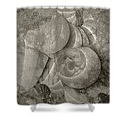 Fossilized Shell - B And W Shower Curtain by Klara Acel