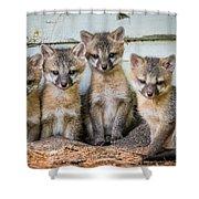 Four Fox Kits Shower Curtain by Paul Freidlund