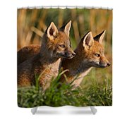 Fox Cubs At Sunrise Shower Curtain by William Jobes