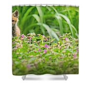 Fox In The Garden Shower Curtain by Everet Regal