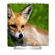 Fox Pup Shower Curtain by Fabrizio Troiani