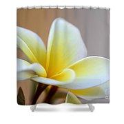 Fragrant Frangipani Flower Shower Curtain by Sabrina L Ryan