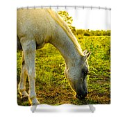Freckles At Sunset Shower Curtain by David Morefield