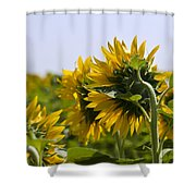 French Sunflowers Shower Curtain by Georgia Fowler