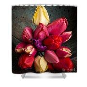 Fresh Spring Tulips Still Life Shower Curtain by Edward Fielding