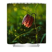 Fritillaria Meleagris Shower Curtain by Davorin Mance