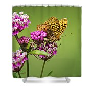 Fritillary Butterfly Square Format Shower Curtain by Christina Rollo