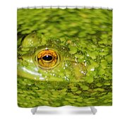 Frog In Single Celled Algae Shower Curtain by Optical Playground By MP Ray
