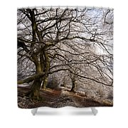 Frosted Path Shower Curtain by Anne Gilbert