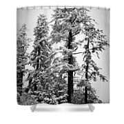 Frozen Beauty Shower Curtain by Betty Depee