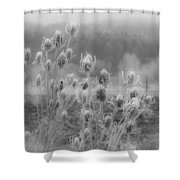 Frozen Teasel Shower Curtain by Jean Noren