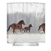 Frozen Track Shower Curtain by Mike  Dawson