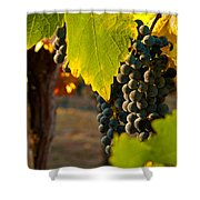 Fruit Of The Vine Shower Curtain by Bill Gallagher