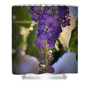 Fruit Of The Vine Shower Curtain by Donna Kennedy