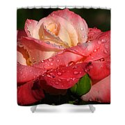 Full Bloom Shower Curtain by Juergen Roth