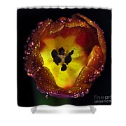 Furnace in a Tulip 2 Shower Curtain by Kaye Menner