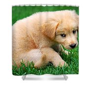 Fuzzy Golden Puppy Shower Curtain by Christina Rollo