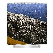 Gannets At Cape St. Mary's Ecological Bird Sanctuary Shower Curtain by Elena Elisseeva