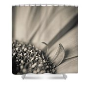 Gerbera Blossom - Bw Shower Curtain by Hannes Cmarits