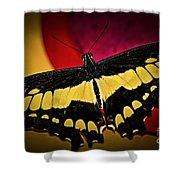 Giant Swallowtail Butterfly Shower Curtain by Elena Elisseeva