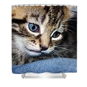 Gizmo Feeling Blue Shower Curtain by Terri Waters