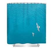 Gliding Seagulls Shower Curtain by Jacqueline Athmann