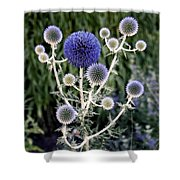 Globe Thistle Shower Curtain by Rona Black