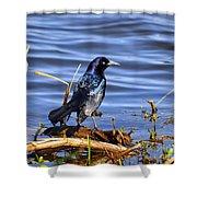 Glorious Grackle Shower Curtain by Al Powell Photography USA