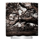 Gnarly Limbs At The Ashley River In Charleston Shower Curtain by Susanne Van Hulst