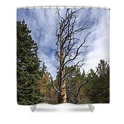 Gnarly Tree - Pancake Rocks - Divide Colorado Shower Curtain by Brian Harig