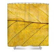 Golden Beech Leaf Shower Curtain by Anne Gilbert