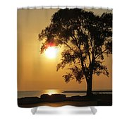 Golden Morning Shower Curtain by Kay Novy
