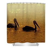 Golden Morning Shower Curtain by Mike  Dawson