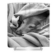 Golden Retriever Dog Under The Blanket Shower Curtain by Jennie Marie Schell