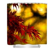 Graceful Leaves Shower Curtain by Mike Reid