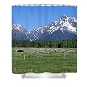 Grand Teton Buffalo Shower Curtain by Brian Harig