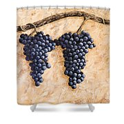 Grape Vine Shower Curtain by Darice Machel McGuire
