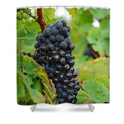 Grapes Shower Curtain by Hannes Cmarits