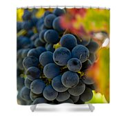Grapes On The Vine Shower Curtain by Bill Gallagher