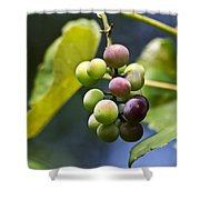 Grapes On The Vine Shower Curtain by Christina Rollo