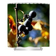 Grapes On The Vine No.2 Shower Curtain by Neal  Eslinger