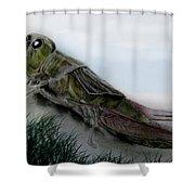 Grasshopper Resting Shower Curtain by Cynthia Adams
