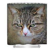 Gray Tabby Cat Shower Curtain by Jai Johnson