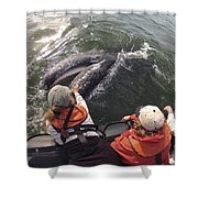 Gray Whale Calf And Tourists Baja Shower Curtain by Flip Nicklin