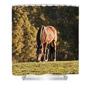 Grazing Horse At Sunset Shower Curtain by Michelle Wrighton